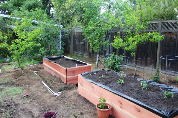 Planters, installed. Since we've put them in, the plants have really gone to town. Especially this week with all the heat!